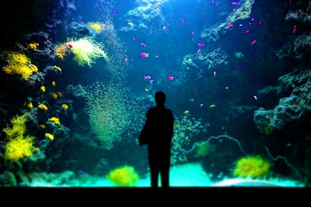 00ヘッダー アクアマリン順11サンゴ礁の海s★DSC08013wx.jpg
