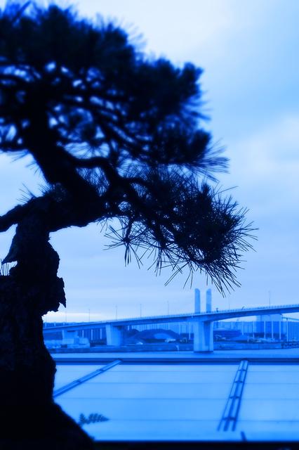 29アクアマリン順08盆栽の庭s★DSC08005wx.jpg